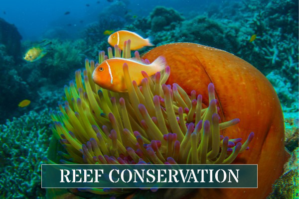 Learn about Reef Conservation and Ecology